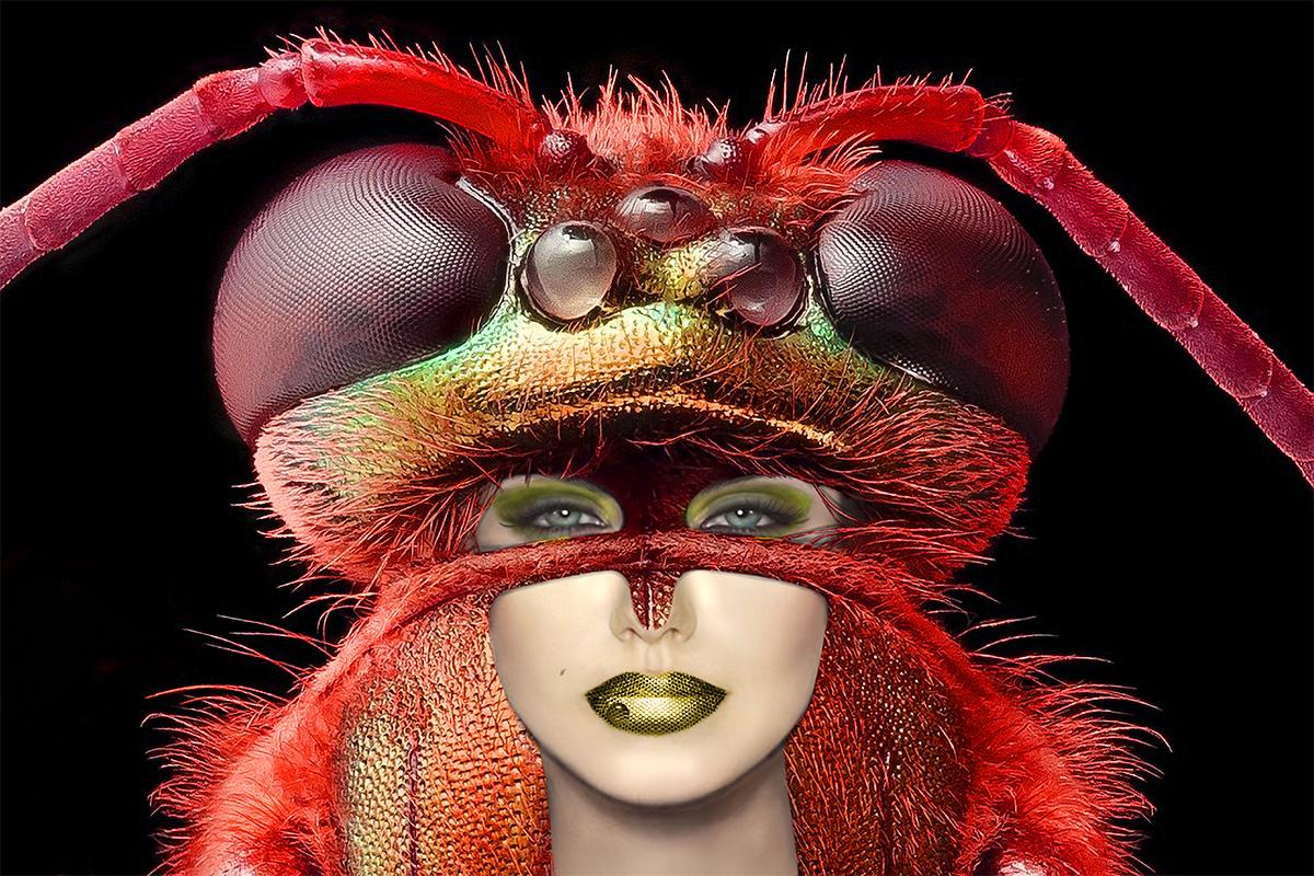 Bee licious