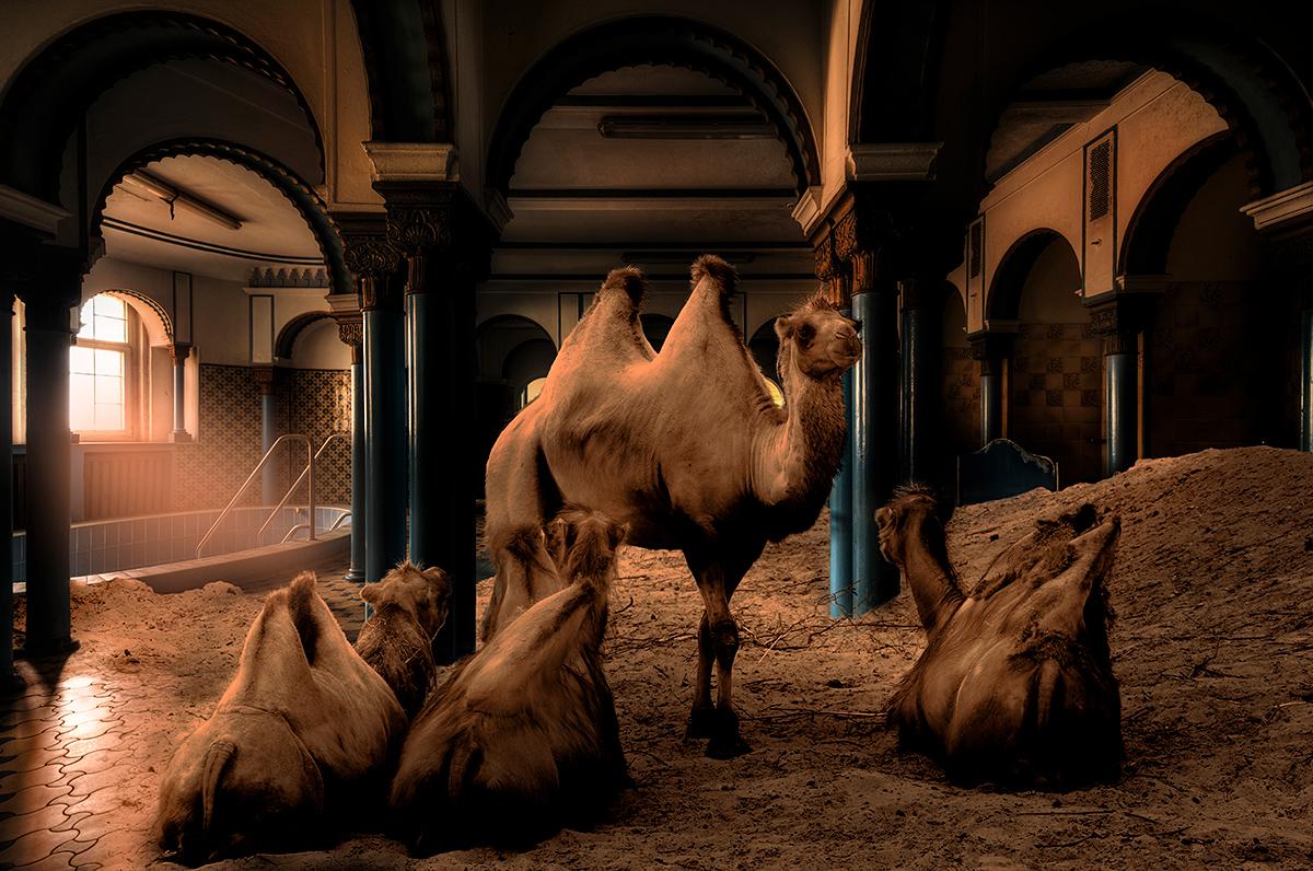 Camel Spa