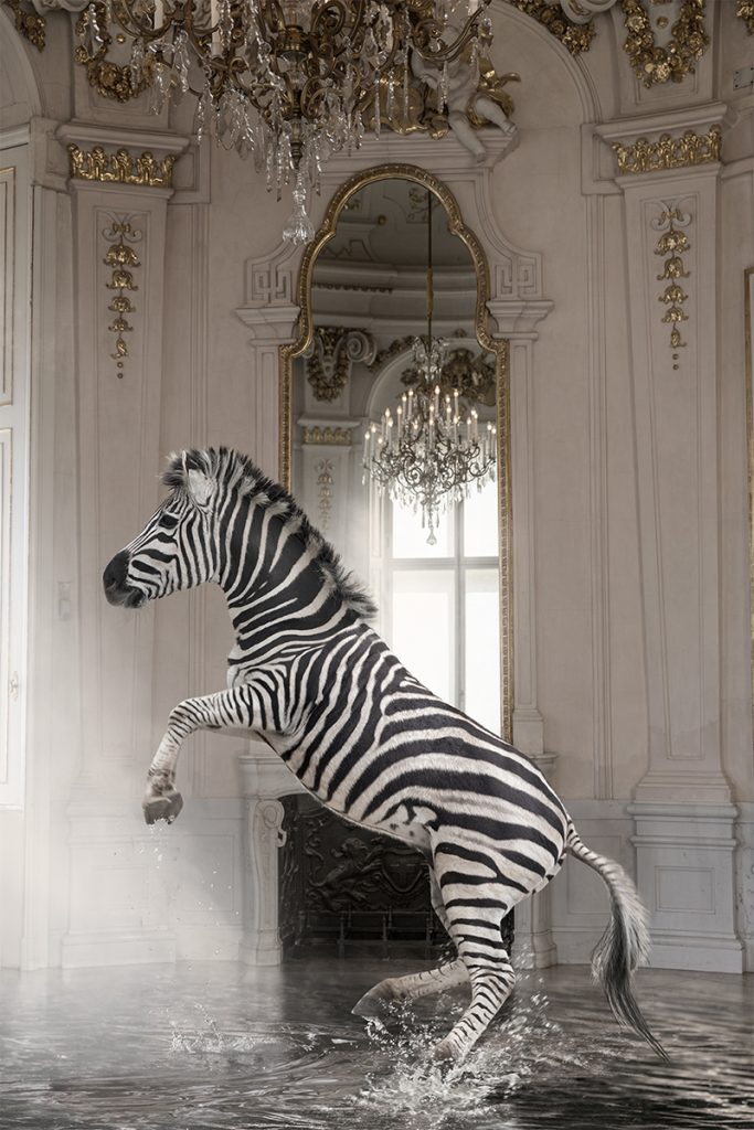 zebra in a palace