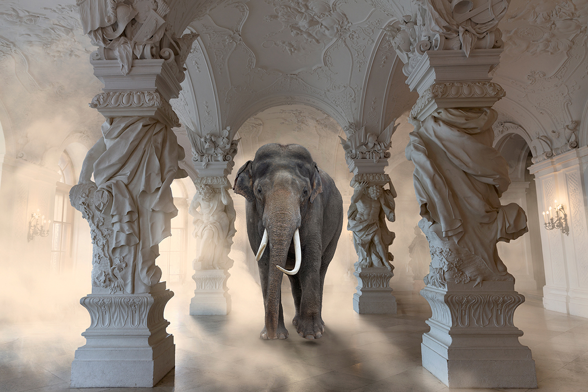 elephant inside palace