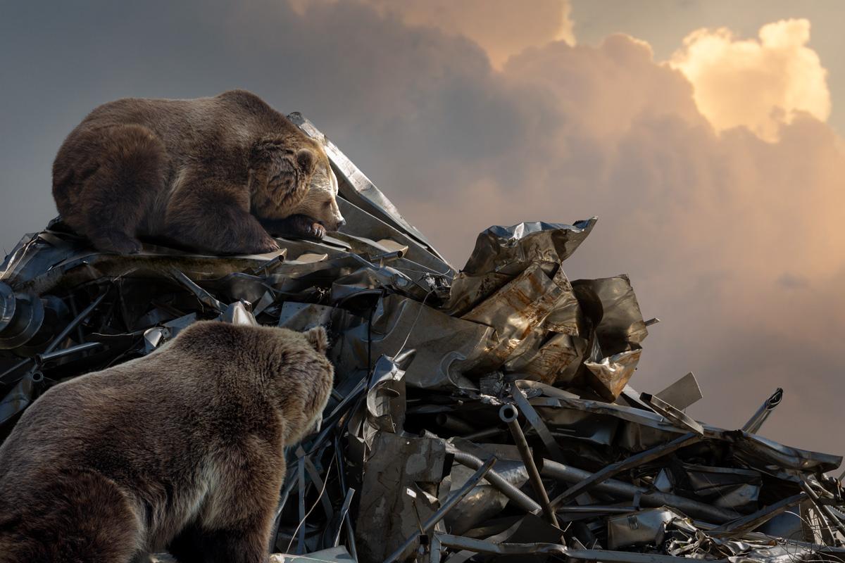 bears on scrapheap