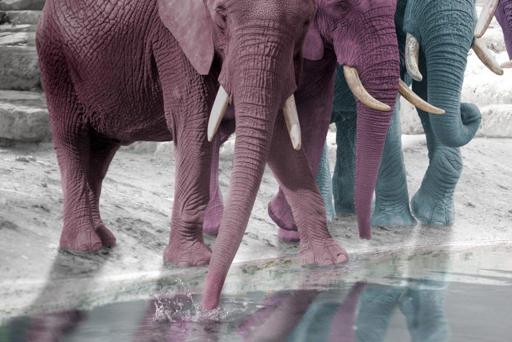 pastel elephants close up