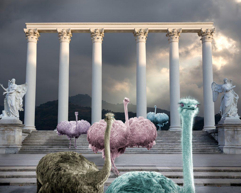 pastel ostriches like ballerinas