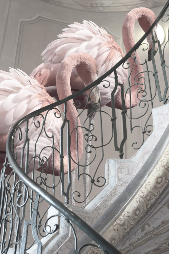 two flamingos and stairs close up