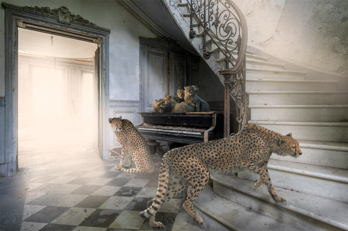 Cheetahs in an abandoned mansion with piano and a staircase