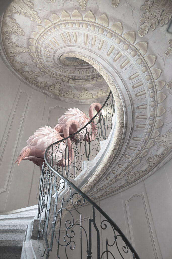 Two Flamingos and stairs