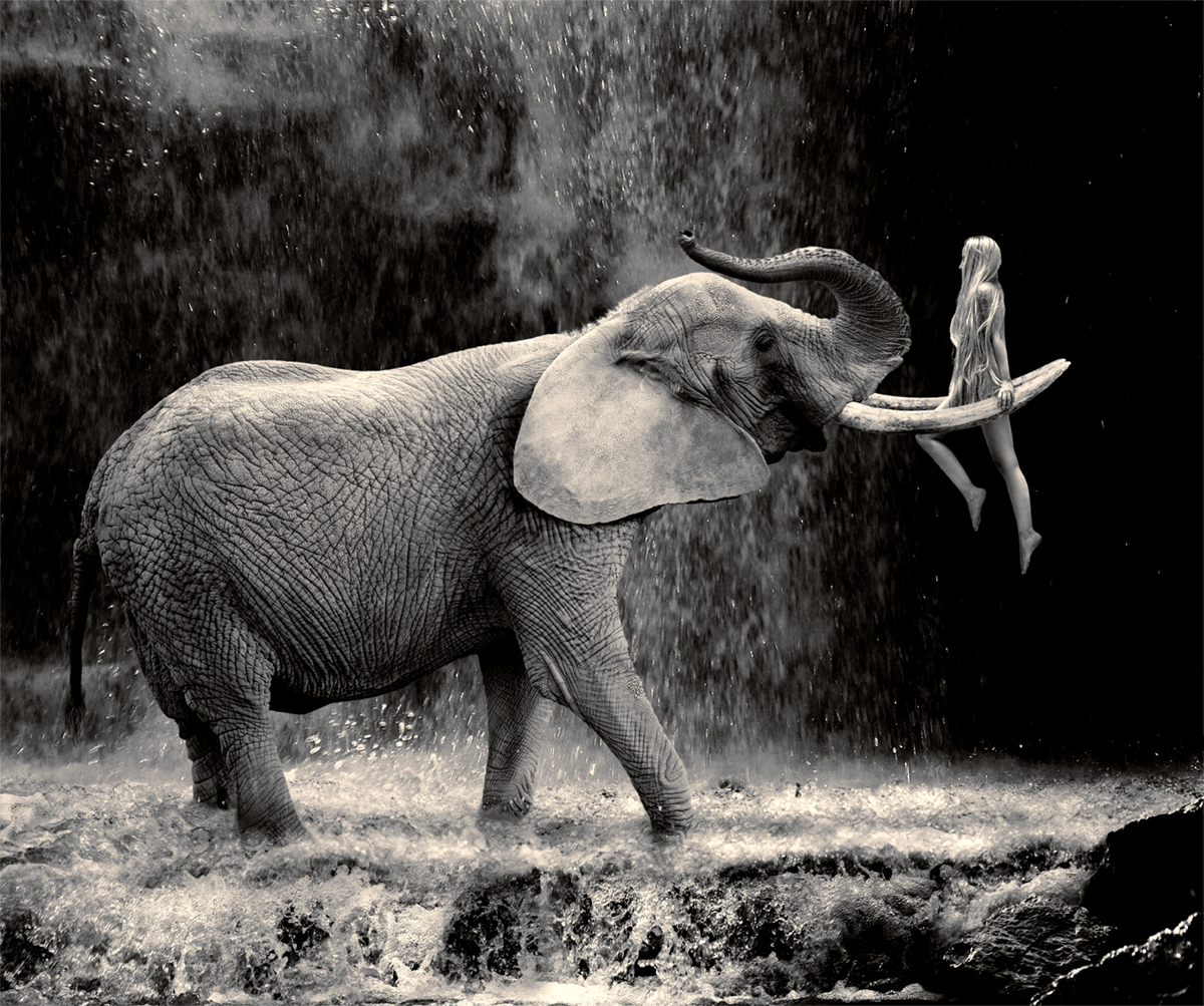 Elephant with woman hanging on the tusks