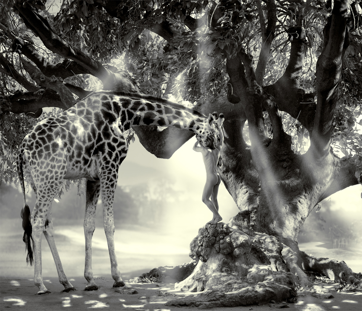 nude man standing on an old tree and hugging a giraffe