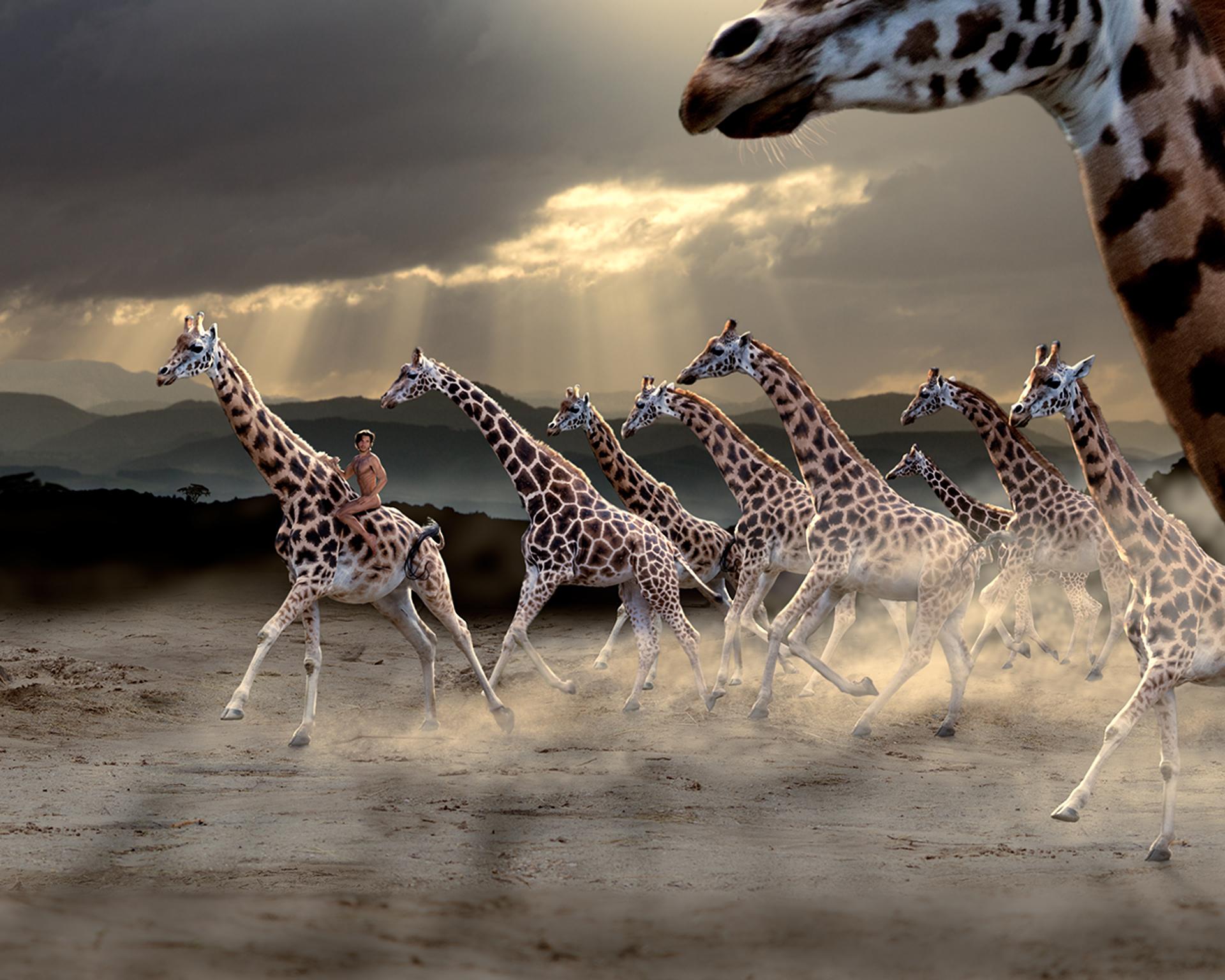 man riding giraffes
