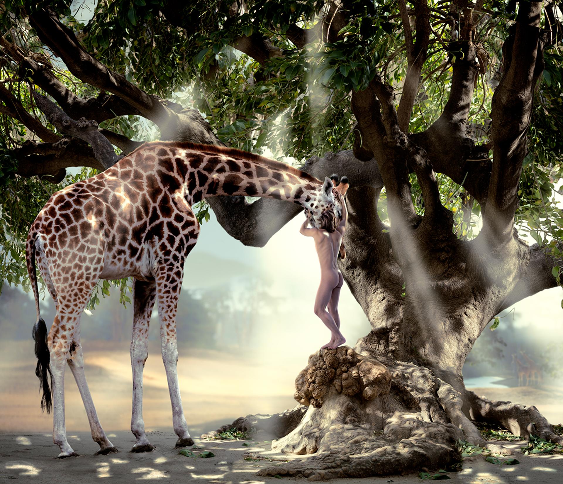 nude man hugging a giraffe, standing on an old tree