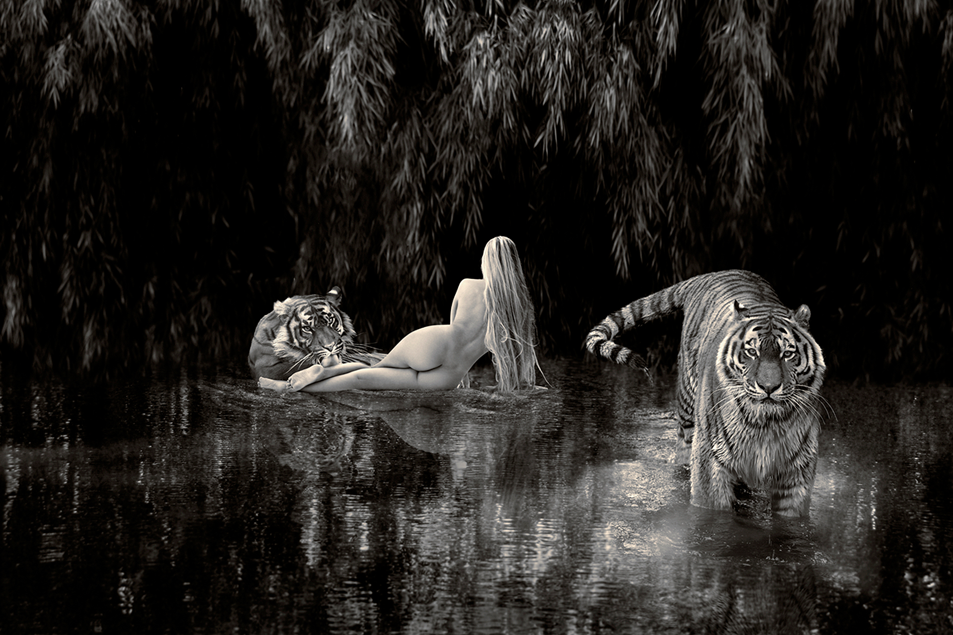 a woman bathing with tigers